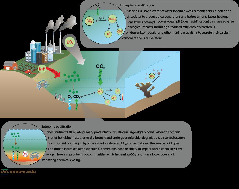 Part 3 Infographic- ian-diagram-acidification-ncscm